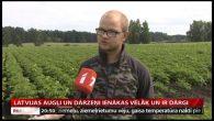 Latvijas augļi un dārzeņi ienākas vēlāk un ir dārgi