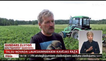 Talsu novada lauksaimniekiem kavējas raža